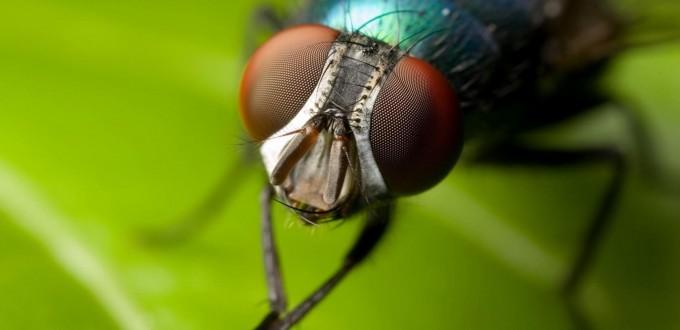mosca descartes