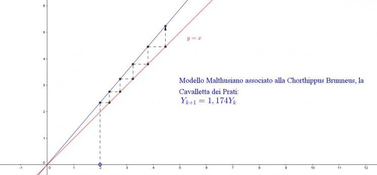 Grafico Cavallette