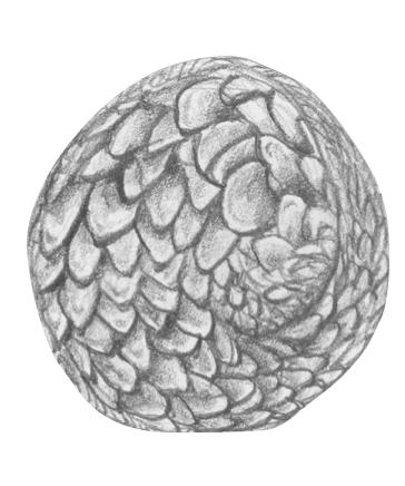 pangolino-raggomitolato
