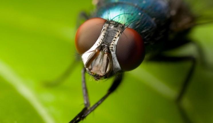 mosca-1639521