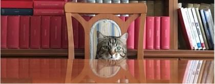 gatto_1